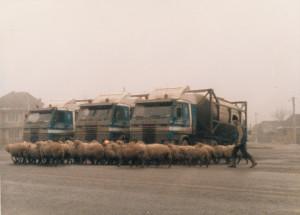 Van der Ham 032